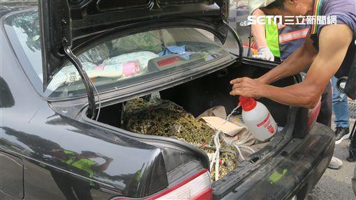阮男帶鱷魚前去行政院抗議(記者盧素梅攝影)