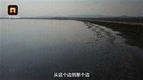 遼寧連日高溫,水庫裡大量魚群缺氧死亡。(圖/翻攝自梨視頻)