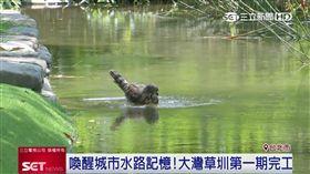 挺生態保育!全聯協助生態草圳計畫 大安森林公園變了 業配