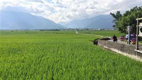 池上田野圖,農地,稻田,鄉村