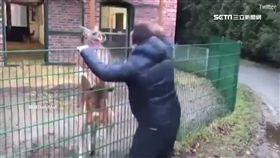 母湯惹動物!男子挑釁公牛不要命 遭拋遭撞一秒GG