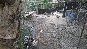 22隻雞不翼而飛