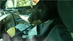 轎車遭劫!警大陣仗圍捕 破門才發現「不速之客」是黑熊 圖/翻攝臉書