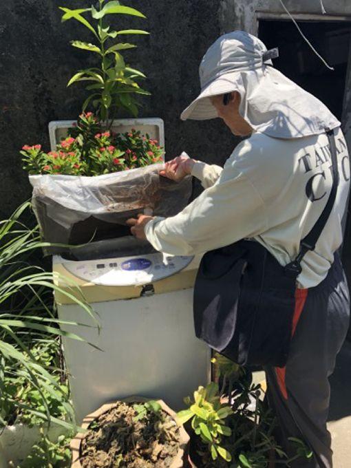 一屋清出17個斑蚊孑孓積水容器(1)針對新北市新莊區瓊林里登革熱疫情,衛福部疾管署動員前往進行病媒蚊孳生源複查,3日查獲該里某公司竟有17個有斑蚊孑孓的積水容器,顯示民眾對於登革熱防疫意識不足。(衛福部疾管署提供)中央社記者張茗喧傳真 107年8月4日