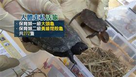腿綁279隻龜鼠闖關 3女怪姿露餡 SOT 金門,走私,活體動物,闖關,烏龜,松鼠,保育