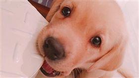 新北,警犬,福星,多多,單身。翻攝自IG:policedog_fuxing