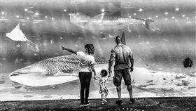 巨石強森參觀水族館