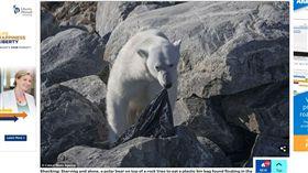 北極熊(圖/攝影者Fabrice Guerin, 翻攝自Daily Mail)  https://goo.gl/AczSii