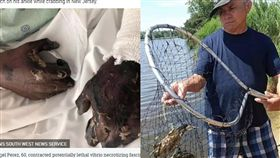 美國,海邊,螃蟹,感染,截肢(圖/翻攝自太陽報)
