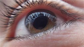 眼睛、青光眼、眼科/示意圖/pixabay
