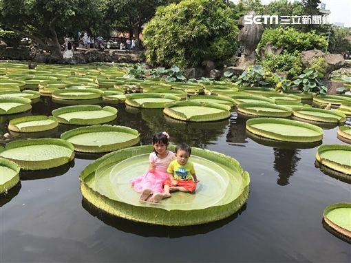 雙溪公園,大王蓮,台北市工務局,公園處,漂浮