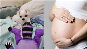 男友媽「養狗不會懷孕」 網酸:跟婆婆住才不會(左圖/翻攝自爆怨公社、右圖/翻攝自pixabay)