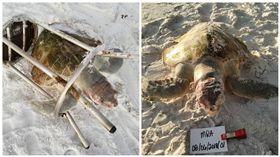 美國一隻肯氏海龜慘死海灘(圖/翻攝自South Walton Turtle Watch臉書)