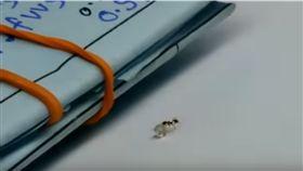 螞蟻,動物,小偷,鑽石,影片