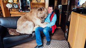 俄羅斯,棕熊,飼養,野生動物,危險 圖/翻攝自LADbible