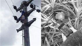 大陸,電桿,觸電,斷頭,高壓電,家長,鳥巢,爬電桿,懸掛,屍體 圖/翻攝自微博