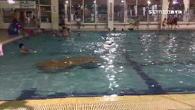 男童泳池溺g2400