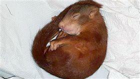 松鼠寶寶死纏路人 警方到場「收編」 德國,卡爾斯魯爾,松鼠,吉祥物,Karl-Friedrich 翻攝自推特