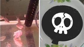 食人魚,死亡,寵物,爆廢公社 圖/翻攝自臉書