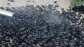 澳洲,新南威爾斯州,乾旱,牛,水車 圖/翻攝自臉書