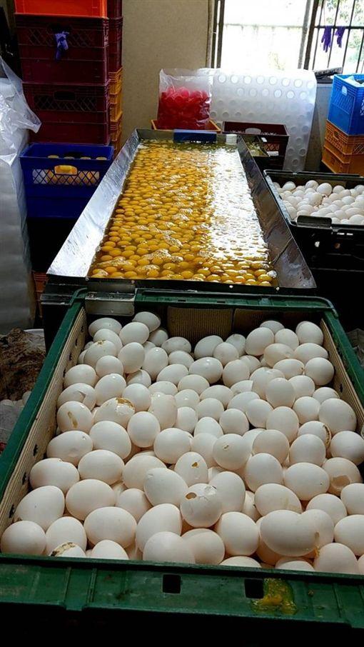 桃園,元山蛋品,臭蛋,液蛋,自助餐,烘焙坊