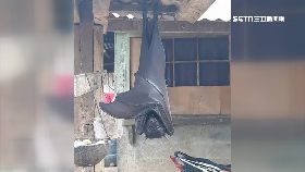 驚人蝙蝠鬼1800