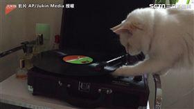 DJ喵認真認真研究「刷盤」。