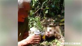 台灣獼猴疑遭獵殺,還被PO網譏笑。(圖/取自爆廢公社)