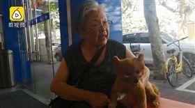 「牠生病我就哭!」兒離世留15歲愛犬 84歲奶奶接手養 圖/翻攝自梨視頻