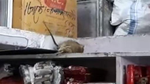 印度,老,雜貨店,打架,旁遮普省(圖/翻攝自YouTube)