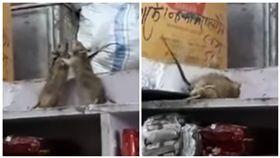 印度,老鼠,雜貨店,打架,旁遮普省(圖/翻攝自YouTube)