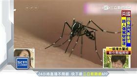 蚊子,學歷,基因,叮咬,研究