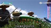 聯合利華挺環保 推國際認證台灣茶