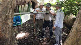保護茄苳樹王 台中市邀樹醫團隊3D健檢