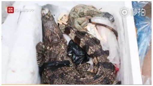 大陸浙江一名女子日前網購4箱保健食品,她收到包裹開箱時,其中一箱竟裝了死掉發臭的鱷魚和蜥蜴,女子嚇得立刻報警處理。警方循線調查後,發現是快遞人員作業疏失,不小心將女子的地址貼到鱷魚箱子上,才會搞了大烏龍。(圖/翻攝自都市快報微博)