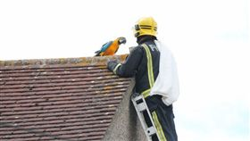 英國,鸚鵡,髒話,消防人員,寵物 圖/翻攝自metro
