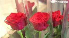 七夕、玫瑰花、花市