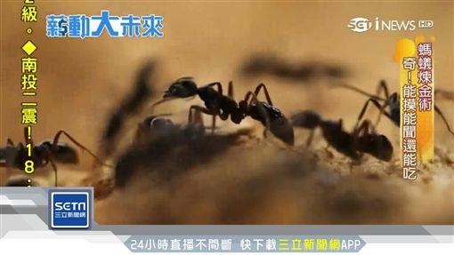 薪動大未來/興趣當飯吃 「40萬螞蟻大軍」當員工
