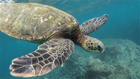 百隻海龜命喪保護區!墨當局調查死因(圖/翻攝自Pixabay)