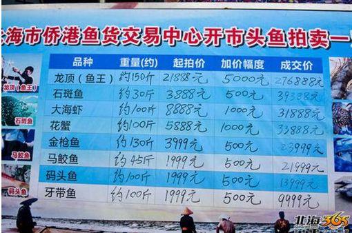 罕見巨型龍膽魚 競拍十分鐘飆破百萬.中國,廣西,龍膽石斑,拍賣,天價翻攝自《北海365網》
