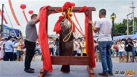 罕見巨型龍膽魚 競拍十分鐘飆破百萬. 中國,廣西,龍膽石斑,拍賣,天價 翻攝自《北海365網》