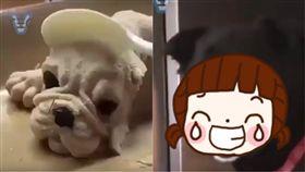 狗,造型,冰淇淋,餐廚,沙皮狗,表情,新奇,甜點,J.C.Co,藝術 圖/翻攝自YouTube http://youtu.be/3NDg8vFpDuA