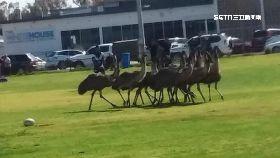 澳旱動物亂1700