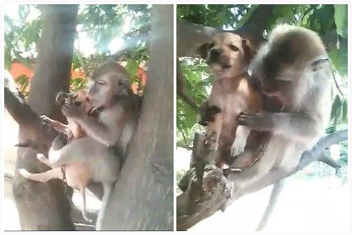 ▲無差別母愛!猴媽媽把狗狗當小孩。(圖/翻攝自泰國網臉書)