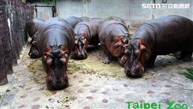 台北市立動物園,祖父母節,動物園,河馬,犀牛,黑熊