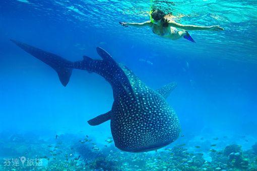 菲律賓夢幻假期!宿霧與鯨鯊共游 薄荷島探訪迷你眼鏡猴(業配圖/廠商提供)