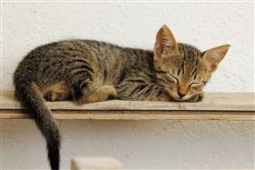 ▲貓,睡覺,懶,懶貓,懶惰,示意圖(示意圖/翻攝自Pixabay) https://goo.gl/TeiuJ3