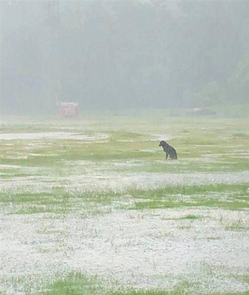 高雄暴雨,小黑狗孤獨坐在濕透的草地。(圖/翻攝自爆廢公社臉書)