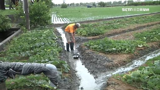 水淹中部蔬菜產區 狂漲!青江菜貴6成3
