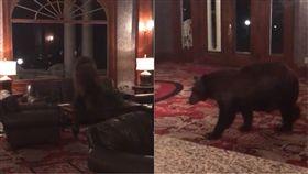美國,科羅拉多州,動物,熊,棕熊,接待,偷拍,嬉戲,櫃台,旅館 圖/翻攝自YouTube http://youtu.be/jz6CcGBIyMs